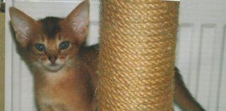 Kočky loví zcela jinak než kocouři