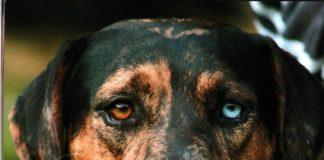 Minulost policejních psů