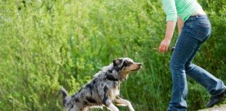 Potřebuje váš pes výcvik?