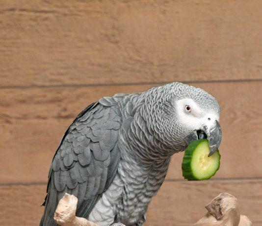 Kteří papoušci se snadno naučí mluvit?